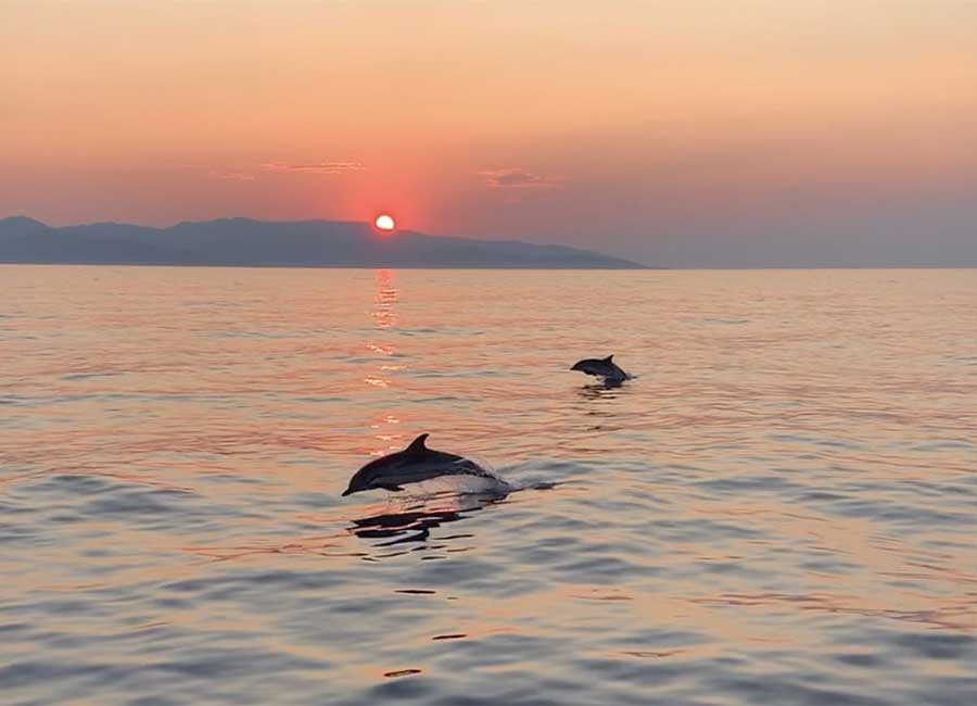 Sunset cruise with sailboat and dolphins in Kavala and Thasos.